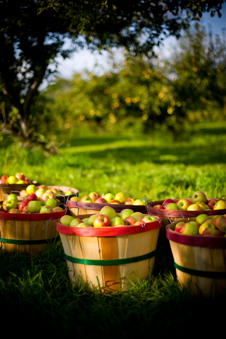 Apple-Baskets-3_webres