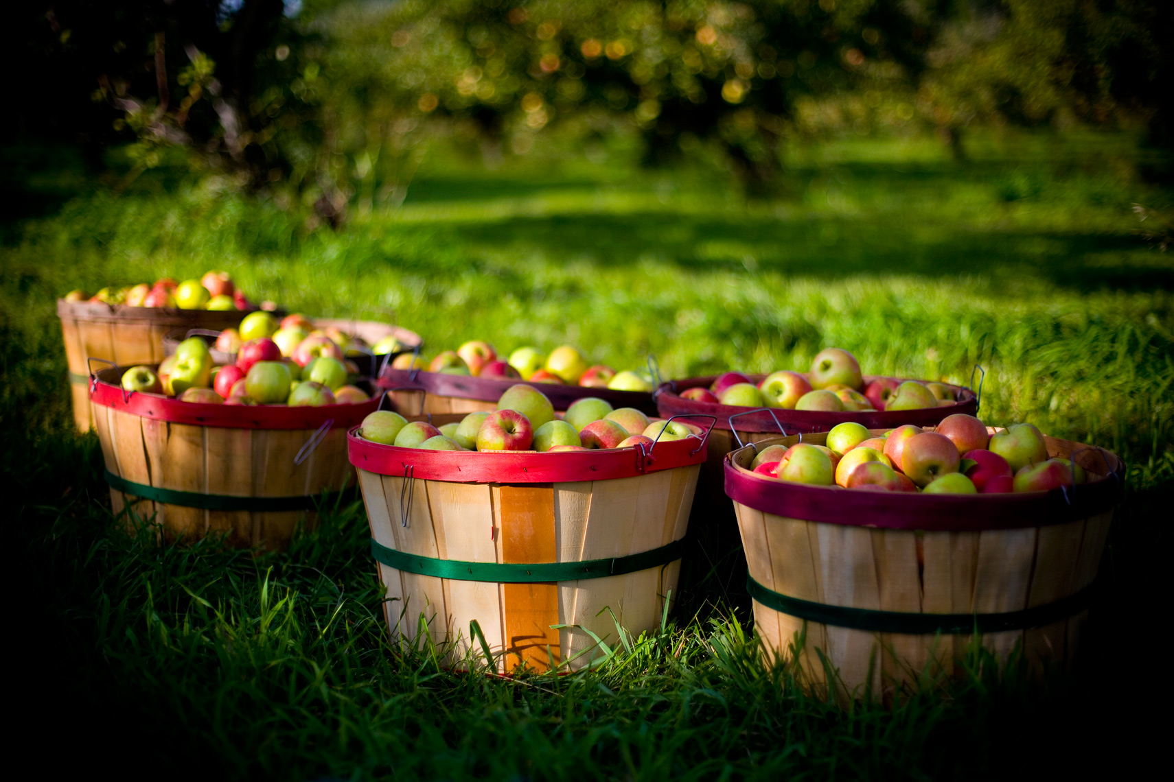 Apple-Baskets_webres